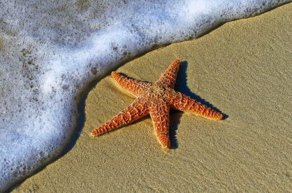 starfish-picture
